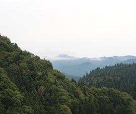 写真:植林3