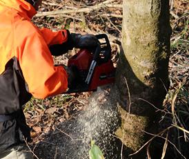 写真:伐採1